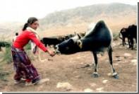 Россельхознадзор запретил поставки молочной продукции турецкого производителя