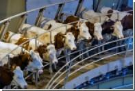 В импортном молоке и масле обнаружены запрещенные вещества