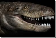 На Мадагаскаре нашли останки «убийцы динозавров»