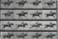 В ДНК живого организма записали анимацию с бегущей лошадью