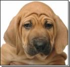 Новинки собачьей моды