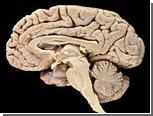 Мозг оказался способен учиться во сне