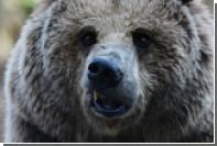 Японский пенсионер-каратист отбился от напавшего на него медведя