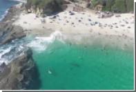 «Подкравшегося» к отдыхающим в Калифорнии кита сняли на видео