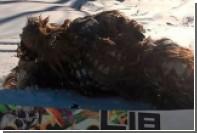 Чубакка избил сотрудника американского курорта сноубордом