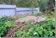 В селе под Киевом отловили съевшего урожай кабачков «динозавра»