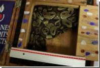 Таможенники парижского аэропорта нашли живого питона в багаже туриста из Гвинеи