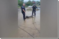 Аллигатор напугал полицейского из Луизианы до визга