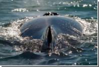 В Австралии из-за атаковавшего лодку кита пострадали четыре туриста