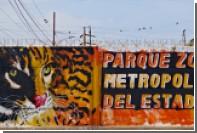 Из зоопарка в Венесуэле украли животных ради еды