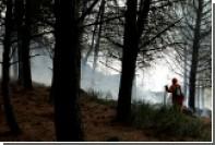 На Сицилии разоблачили поджигавших лес ради наживы добровольцев