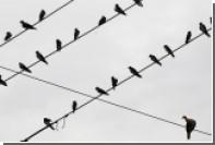 Иранская полиция накрыла сотню голубей-наркокурьеров