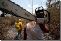 Джихадисты с бензопилой спилили дерево-кяфира в Сирии
