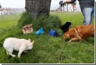 В США отменили митинг после угроз собачников устроить «фекальный протест»