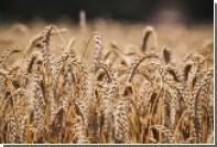 Россия начала поставлять пшеницу в Венесуэлу
