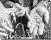Российское зерно продолжит ставить рекорды
