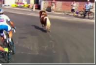 Российский велогонщик перехитрил выбежавшего на трассу пони