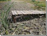 Пострадавшим от засухи российским фермерам выделят 19 миллиардов рублей