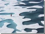 Глобальное потепление связали с видовым разнообразием