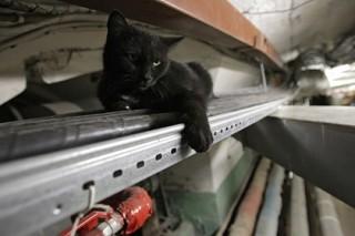 Умерла пострадавшая при пожаре эрмитажная кошка Дуся