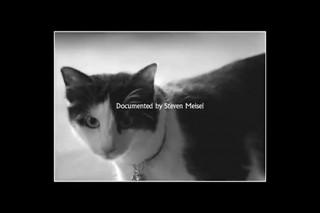 Коты сыграли главную роль в новом рекламном ролике Givenchy