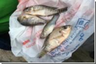 В Мексике хлынул дождь из рыб