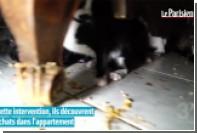 В парижской однокомнатной квартире обнаружили 130 кошек