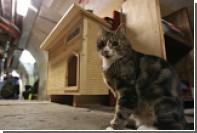 В Эрмитаже опровергли информацию о гибели кошек