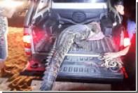 На Пхукете поймали плававшего у пляжей трехметрового крокодила