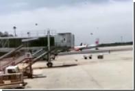 Огромный рой пчел сорвал вылет лайнера в Индонезии