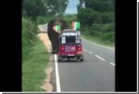 Голодный слон перевернул моторикшу на Шри-Ланке