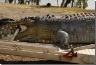 Убийство пятиметрового крокодила вызвало борьбу рептилий за контроль над рекой