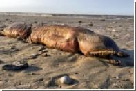 Биологи идентифицировали загадочное зубастое существо с техасского пляжа