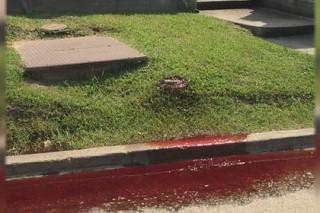 В штате Луизиана улицу залило кровью