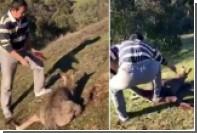 Китаец в Австралии зарезал кенгуру