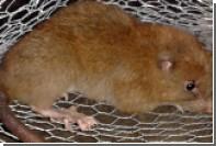 На Соломоновых островах нашли мифическое животное