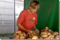 Посетителям люберецкого рынка привиделся Плющенко за прилавком с картошкой