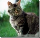 Ученые: Кошек нельзя гладить ни в коем случае