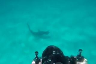 Акула бросилась на снимающего ее водолаза