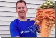 Огромная морковь огородника из США попала в Книгу рекордов Гиннесса