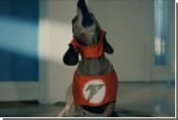 Трейлер «Лиги справедливости» пересняли с собаками