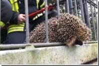 Немецкие пожарные спасли застрявшего в заборе ежика