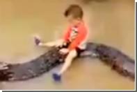 Трехлетний мальчик оседлал шестиметрового питона во Вьетнаме