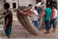 Индонезиец поборол и съел семиметрового питона