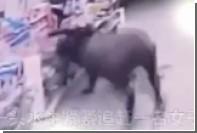 Разъяренный буйвол устроил погром в китайском магазине
