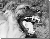 Среди кошек и собак государству пора наводить порядок
