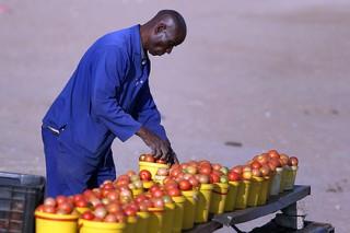 Африканские помидоры из Белоруссии оказались под запретом