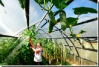 Российские фермеры получат дополнительно два миллиарда на теплицы и технику