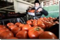Минсельхоз рассчитал допустимую дозу турецких помидоров для россиян