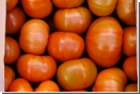 Объявлена дата возвращения турецких помидоров в Россию